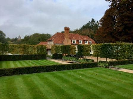 lawn, hedging and pleached trees