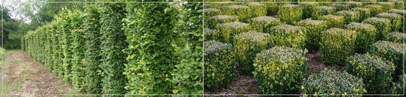 instant hedging banner