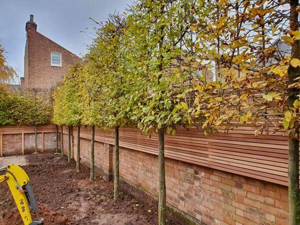 trees to block out neighbours