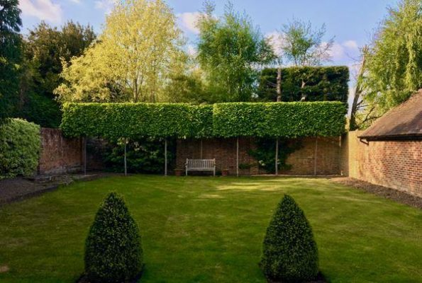 Carpinus betulus pleached tree screen supplied and planted Hampshire